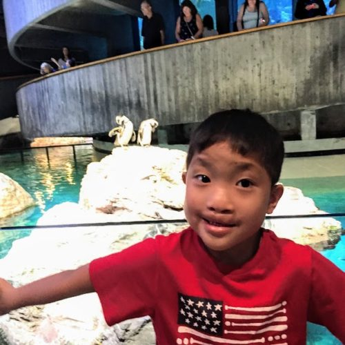 New England Aquarium with kids